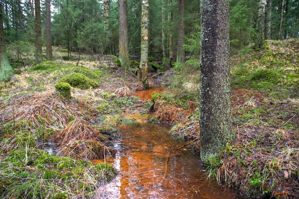 I Rust pigmented stream by the Millhouse, Jalasjärvi.jpg