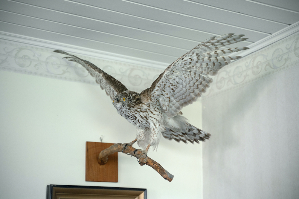 V Stuffed hawk in Mervi's living room.jpg