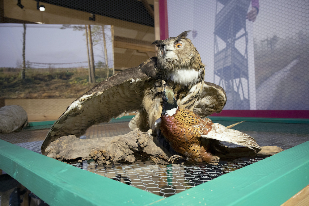 WMTW_exhibition view_Pheasant&EagleOwl.jpg